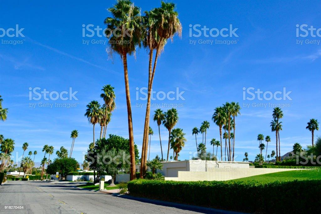 Entzuckend Mitte Des Jahrhunderts Moderne Häuser, Bäume Palm Straßenbild In Palm  Springs, Kalifornien, Vereinigte