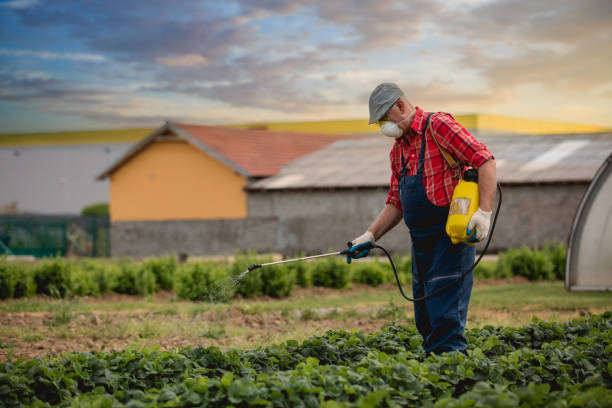 A middle age man work in his strawberry field A middle age man work in his strawberry field crop sprayer stock pictures, royalty-free photos & images