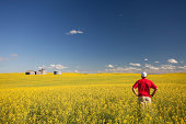 istock Middle Aged Caucasian Farmer Standing in Yellow Canola Field 176525102