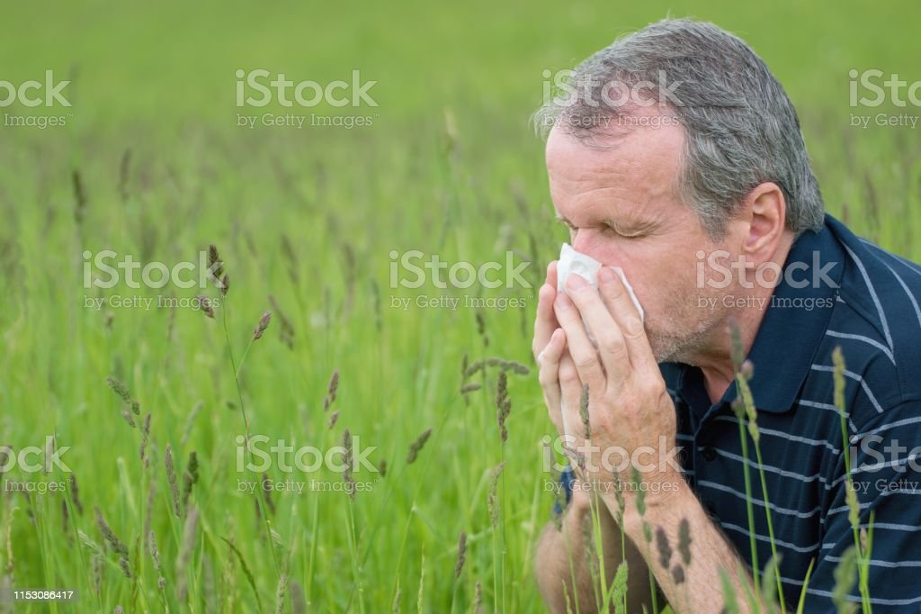 Portrait of middle aged man suffering from hay fever. Seasonal...