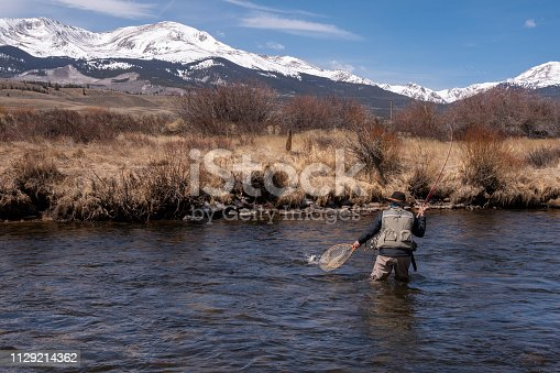 A middle-aged sports woman fly-fishing in the Arkansas River near Leadville, Colorado.