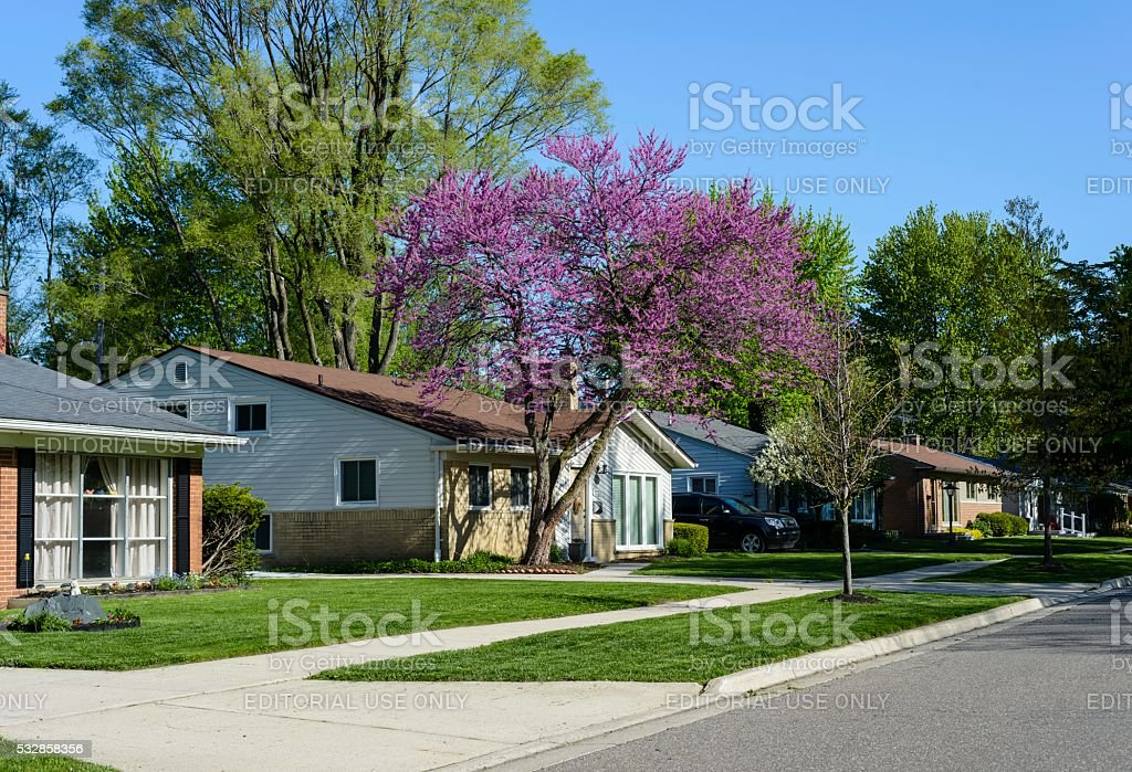 Middle Class American Neigborhood in Spring stock photo