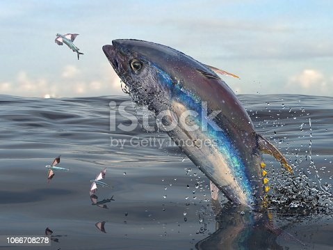 155674939 istock photo Middle of sea big yellow fin tuna jumping to catch flying fishes 3d Render 1066708278