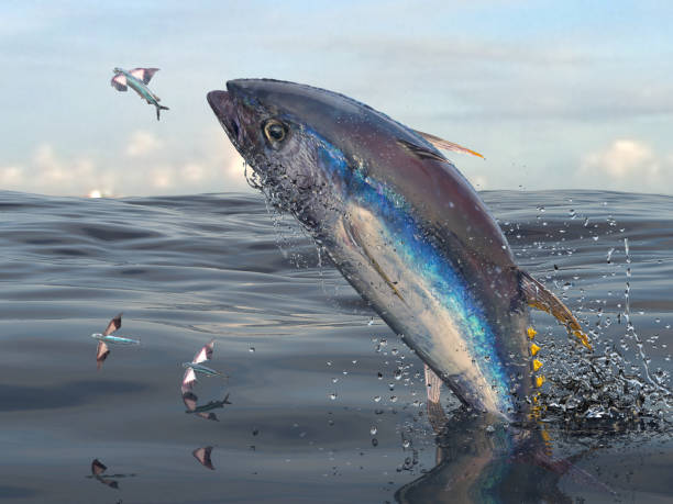 Middle of sea big yellow fin tuna jumping to catch flying fishes 3d Render stock photo