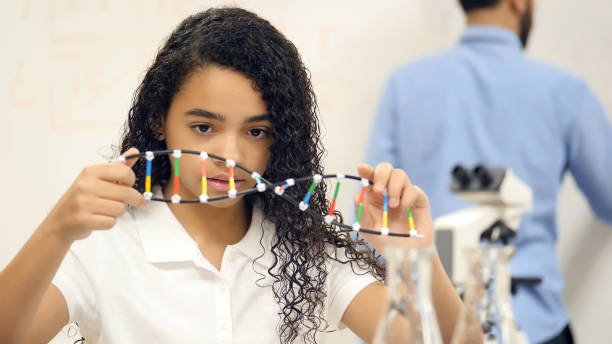 Middle school girl examines DNA helix model Focused middle school student examines DNA helix model during science class. cute middle school girls stock pictures, royalty-free photos & images