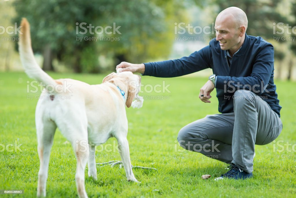 Middle-aged man walking his dog outside in park on sunny day stock photo