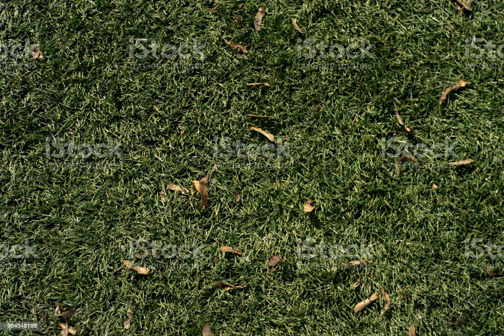 Mid-high lawn with leaves and water drops texture. Park lawn texture. Top view, overhead shot. Grassplot surface backdrop. Divet underlay, decorative background. Green lawn desktop picture. stock photo