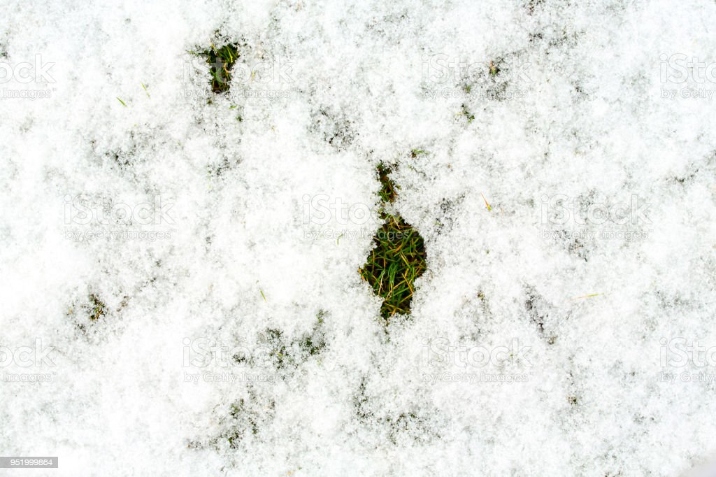 Mid-high lawn with snow texture. Park lawn texture. Top view, overhead shot. Grassplot surface backdrop. Divet underlay, decorative background. Green yellow lawn with snow desktop picture. stock photo