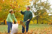 istock Midlife Series: Leaf Fight 173569175