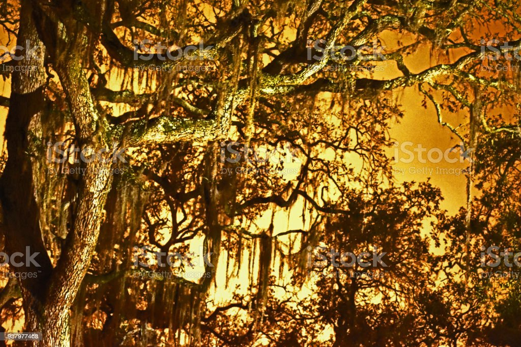 Midnight in Florida Swamps stock photo