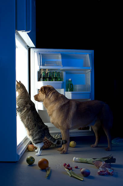 Midnight snacks Cat and dog looking for meat in the refrigerator midnight stock pictures, royalty-free photos & images