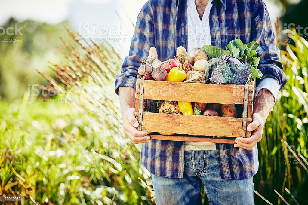 Midsection of male holding crate with vegetables at farm stock photo