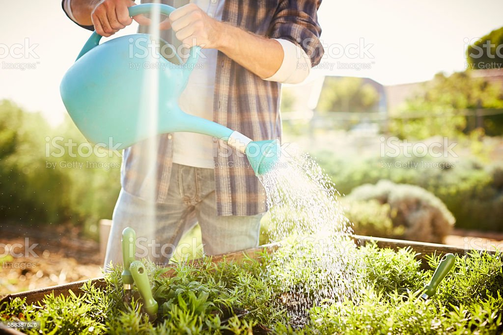 Midsection of man watering seedlings on sunny day stock photo
