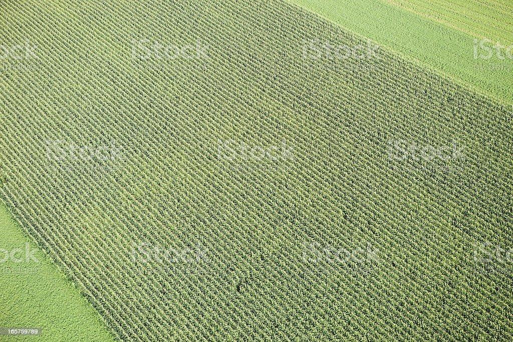 Midsummer Cornfield Aerial Background royalty-free stock photo