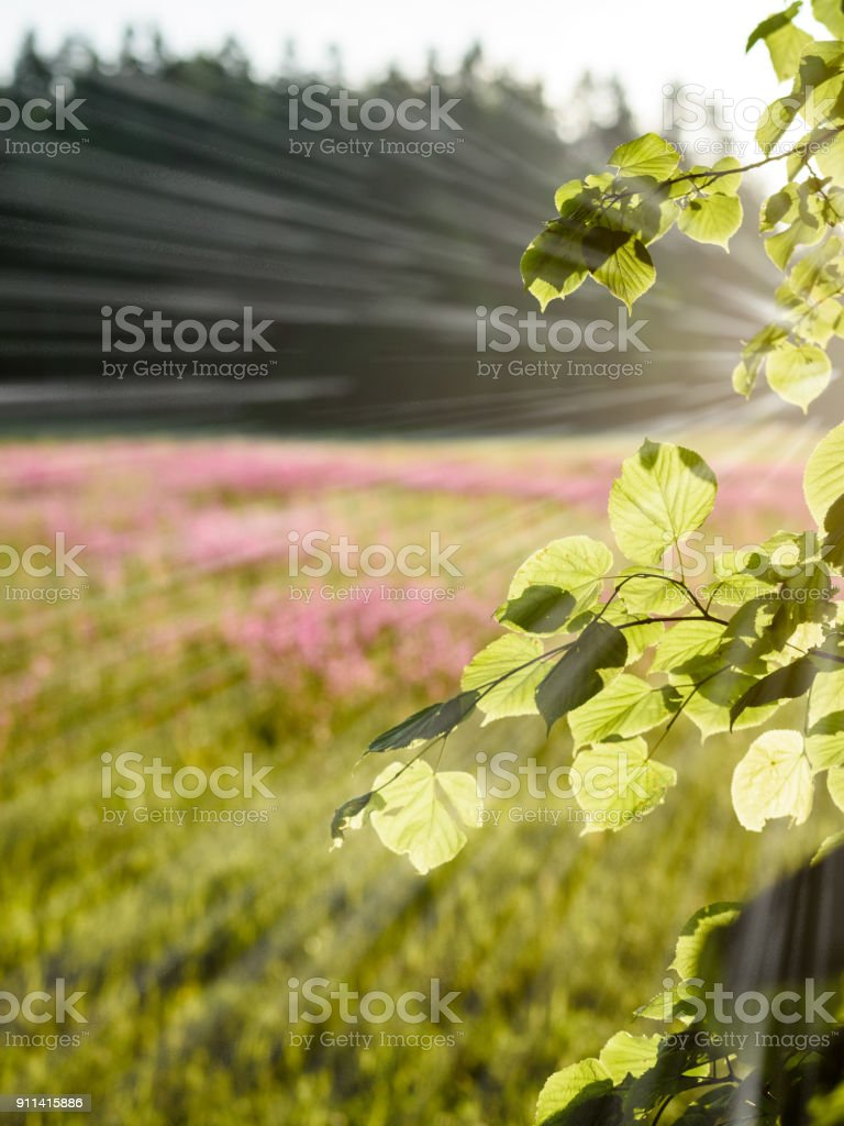 midsummer countryside meadow with flowers - vertical, mobile device ready image - light rays effect stock photo