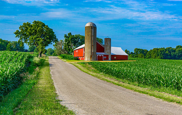 Midwest farm with country road and red barn (P) A country road fills the foreground leading back to a farm with red barn and spring corn crop with clouds above, Midwest USA barn stock pictures, royalty-free photos & images