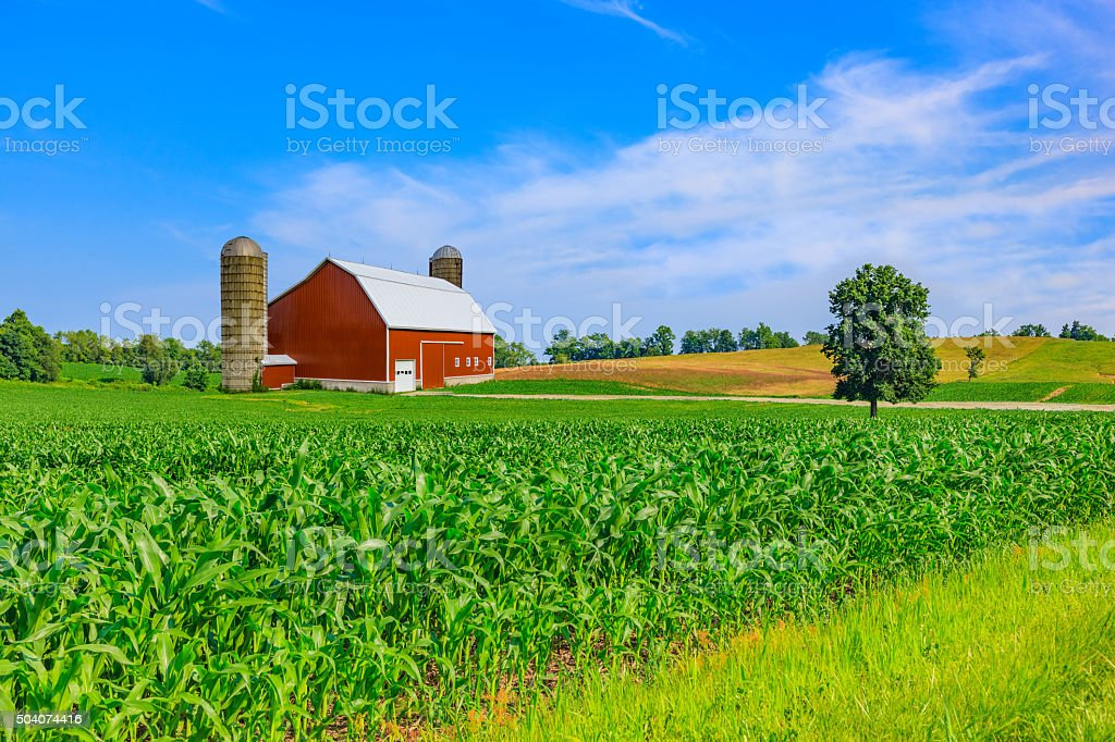 Midwest farm with spring corn crop and red barn stock photo