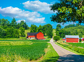 Spring crop fills the foreground leading back to a farm with red barns and rolling hill background with clouds above, Midwest USA