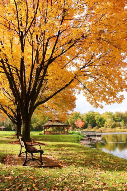 midwest nature background with park view. - september stock photos and pictures
