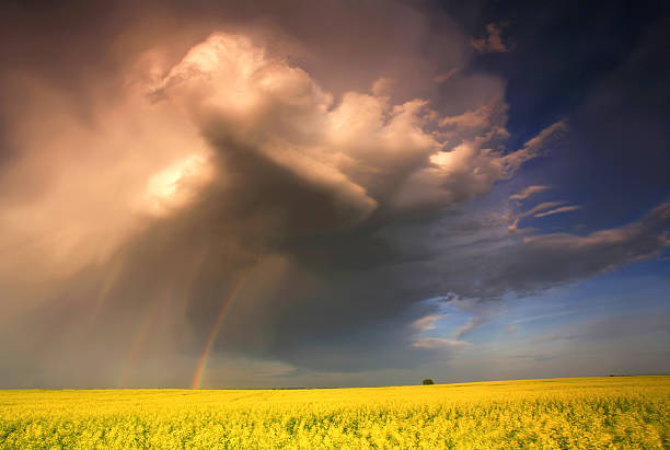 midwest thunderstorm over canola field - great plains stock photos and pictures
