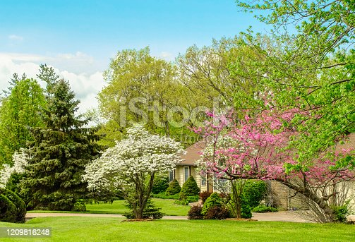 istock Midwestern front yard in spring; blooming trees in foreground 1209816248