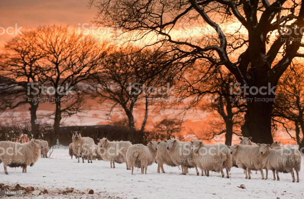 midwinter in england royalty-free stock photo