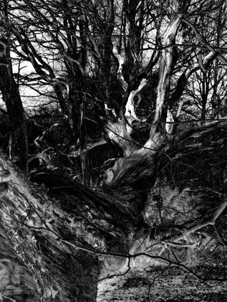 Mighty fallen tree UV-Filter, fluchtpunktperspektive stock pictures, royalty-free photos & images