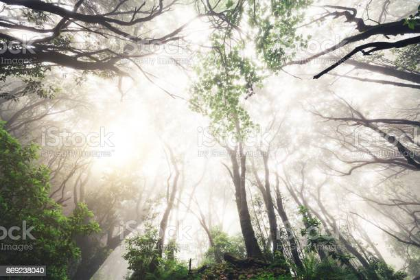 Photo of Mighty Forest On Madeira Island