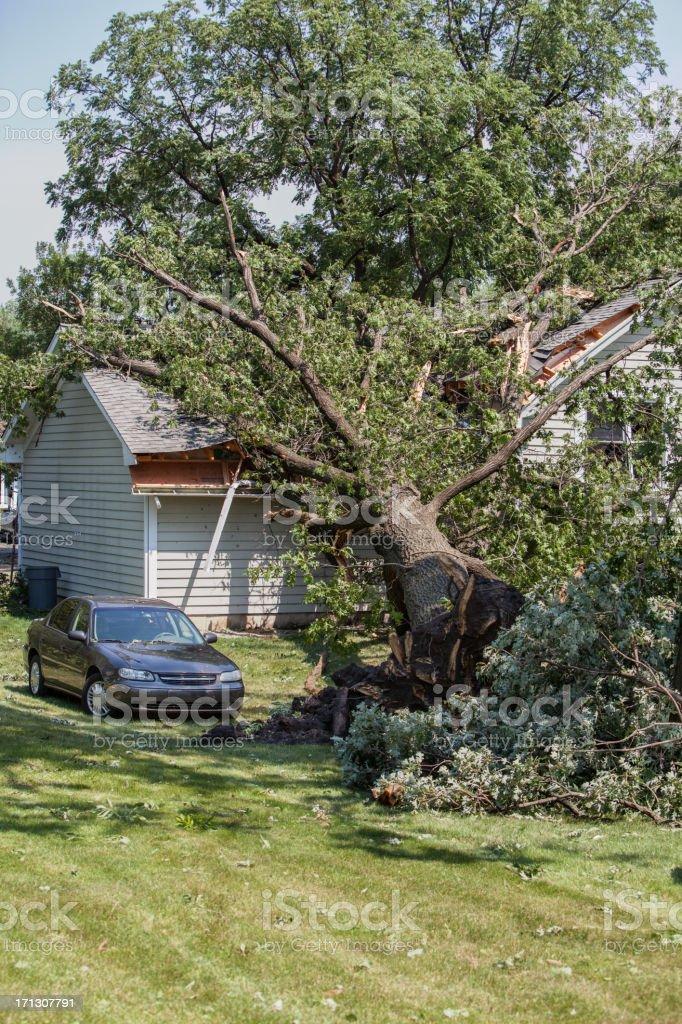 mighty oak falls on house vert stock photo