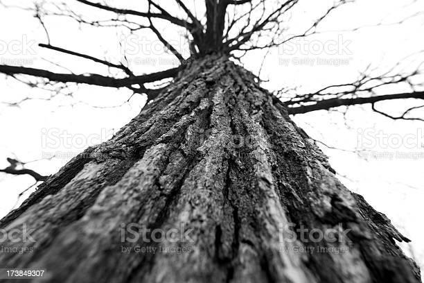 Photo of Mighty Oak Trunk
