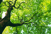 istock mighty tree with green leaves 177310390