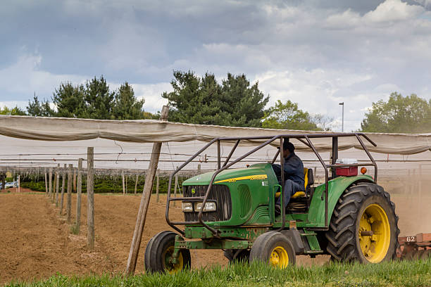 Migrant Farm Worker Windsor, United States - May 07, 2013; A migrant farm worker is seen plowing a tobacco field in Windsor, Connecticut. migratory workers stock pictures, royalty-free photos & images