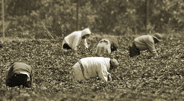 Migrant Workers in the field  migrant worker stock pictures, royalty-free photos & images