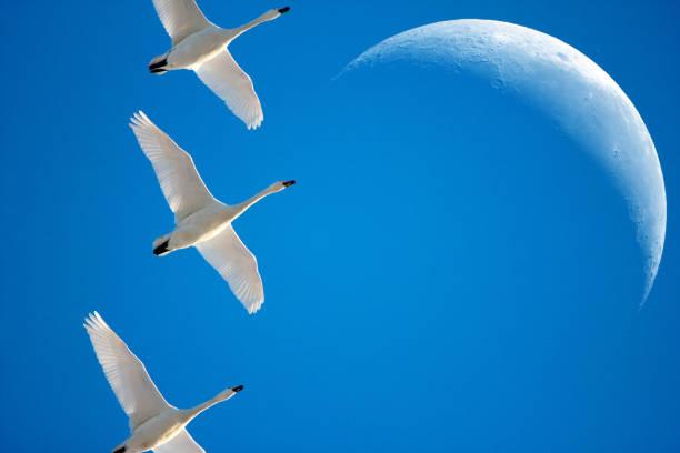 Zugvögel – Foto