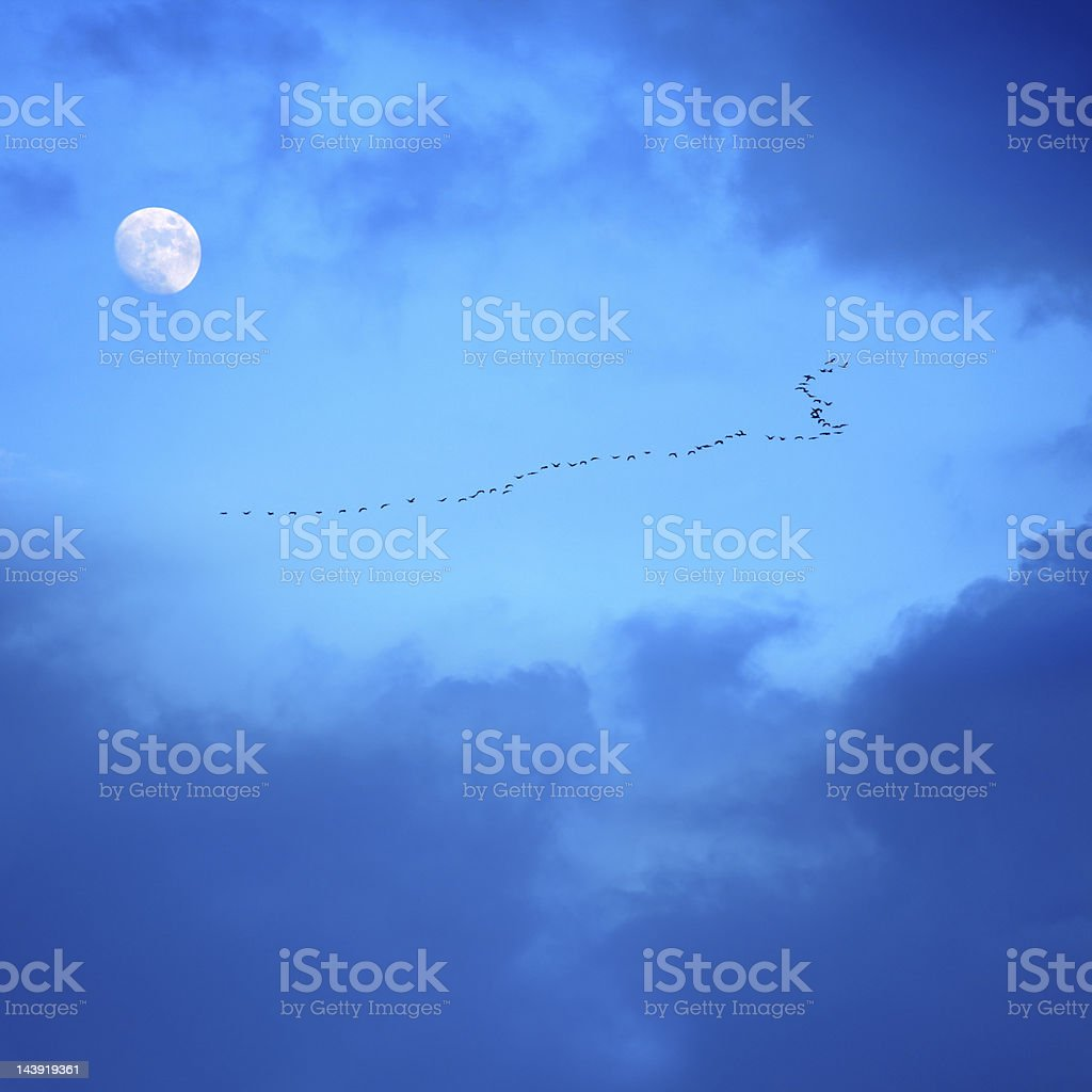 migrating birds royalty-free stock photo