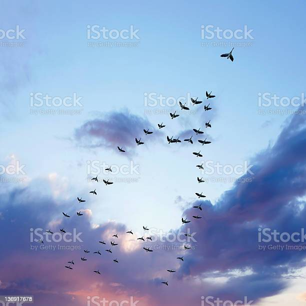 Photo of XL migrating canada geese