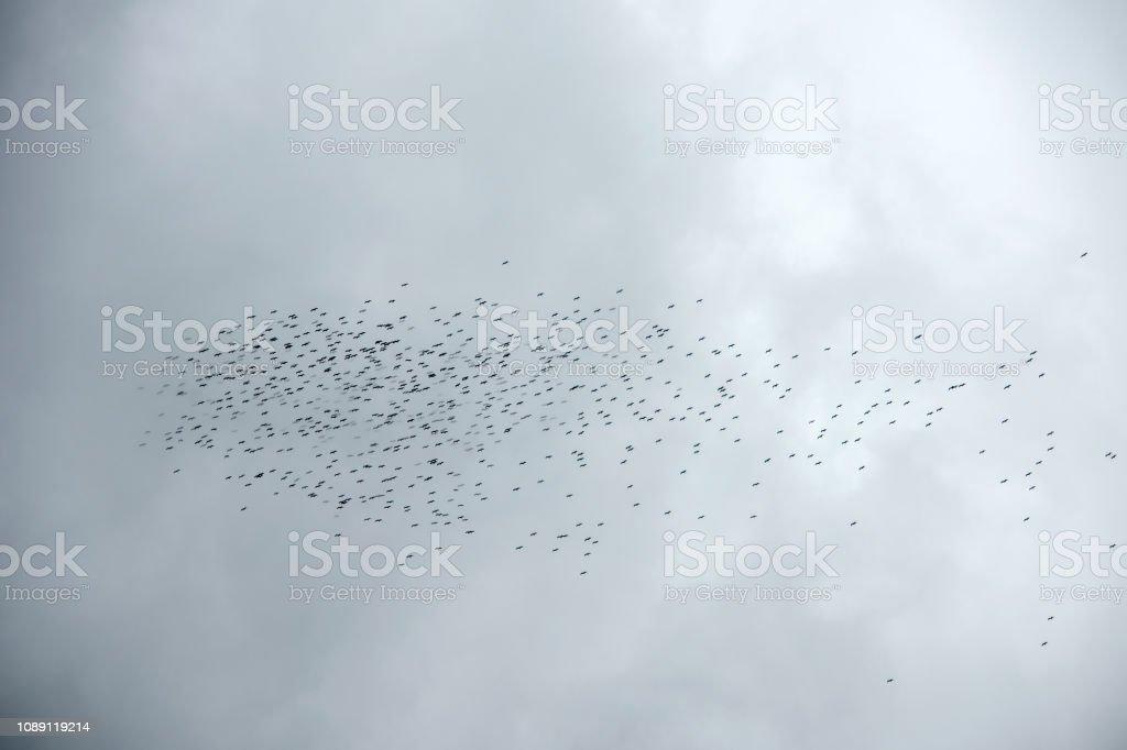 Migration of storks