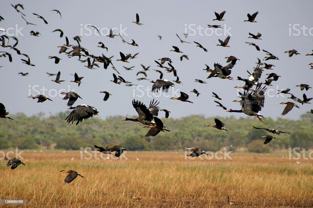Migration royalty-free stock photo