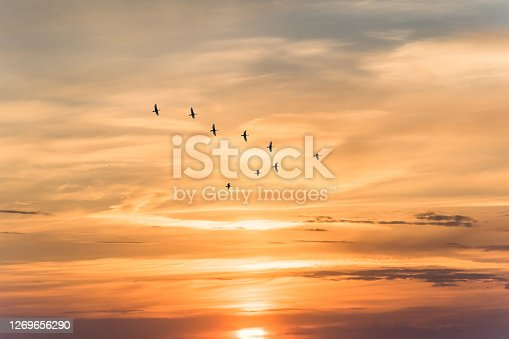istock Migratory birds flying in the shape of v on the soft and blur pastel colored sky background. gradient clouds on the beach resort. nature. sunrise.  peaceful morning.Instagram toned style 1269656290