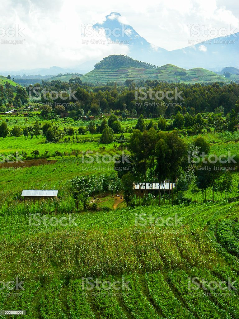 Mikeno Volcano in the Virunga Mountains and Tropical Agriculture Rwanda stock photo