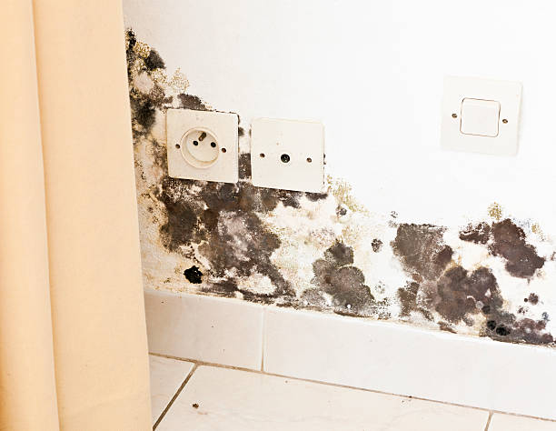 Mildew and Black Mold on Wall with Sockets behind Curtains stock photo