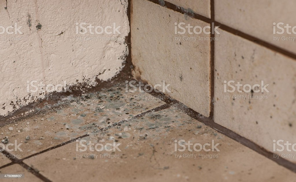 Mildewed Walls stock photo