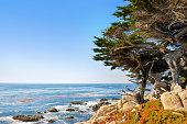Pebble Beach, California, Cypress