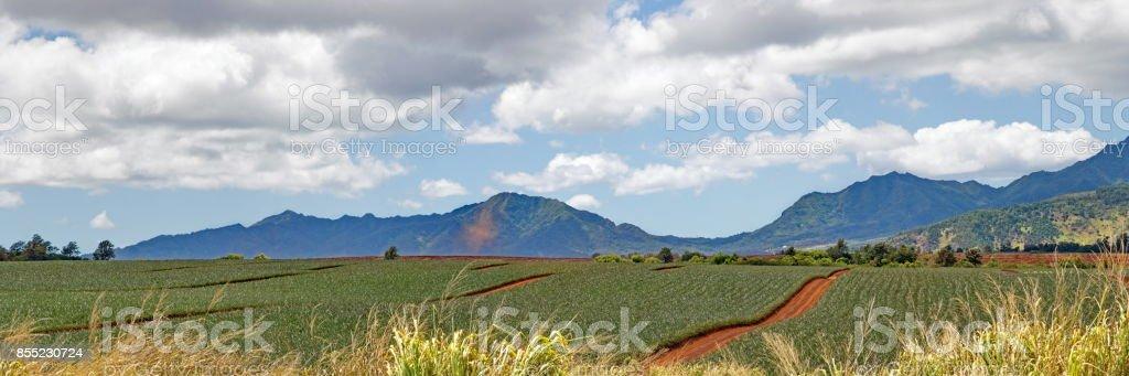 Miles of Hawaiian pineapple views stock photo