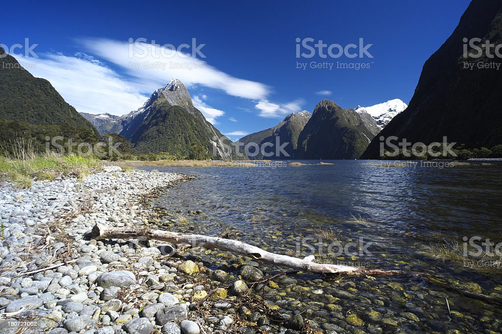 Milford Sound Driftwood royalty-free stock photo