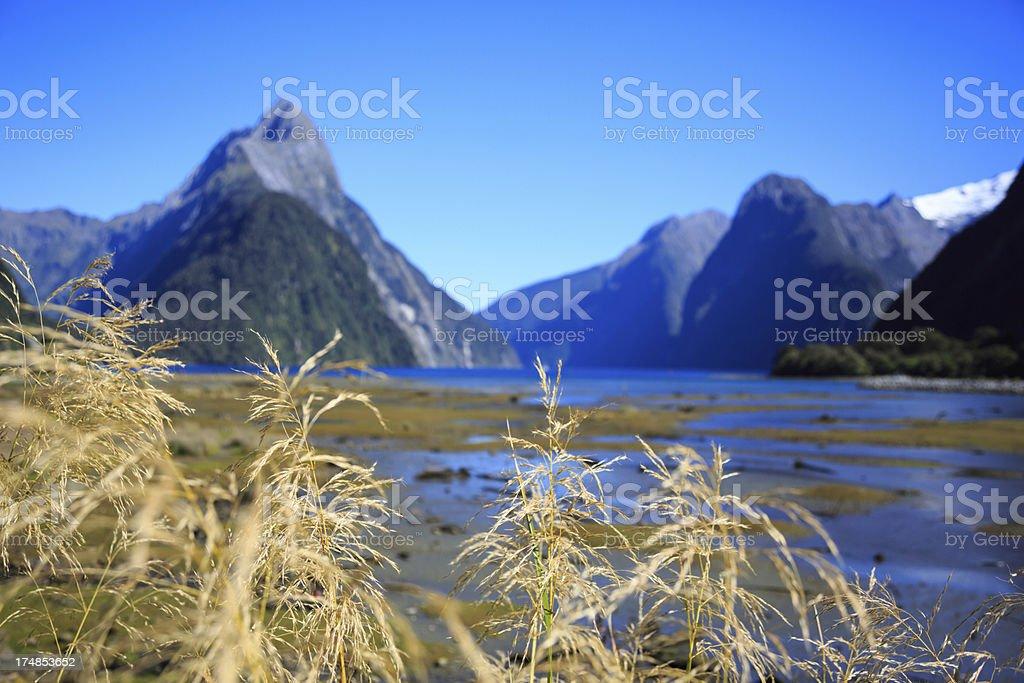 Milford Sound Landscape royalty-free stock photo