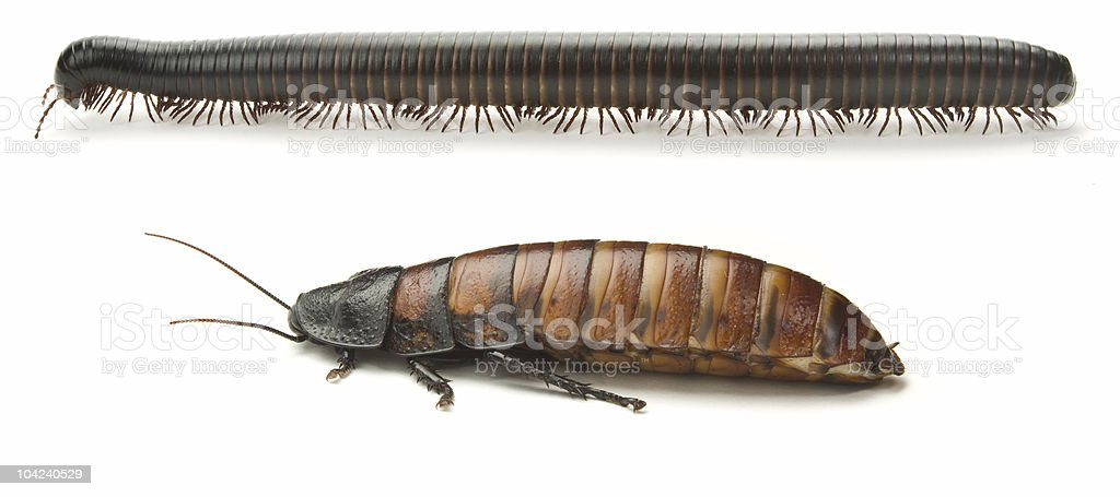 Milipede and Cockroach stock photo