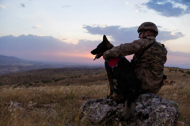 Military dog and its soldier owner at sunset picture id1249961079?b=1&k=6&m=1249961079&s=612x612&w=0&h=q9ydgen47qqz5dm6phsnrvpo dyy qiry6s94dq0f2m=