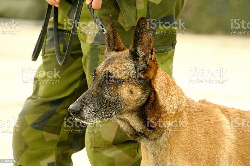 Military dog stock photo