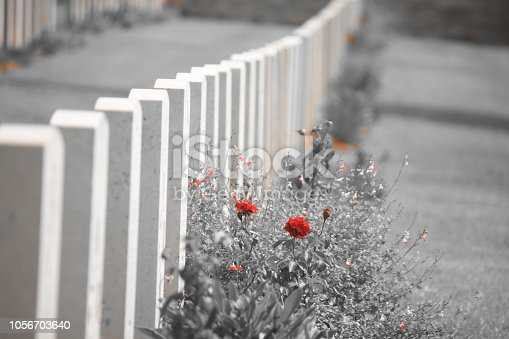 Military graves in a row